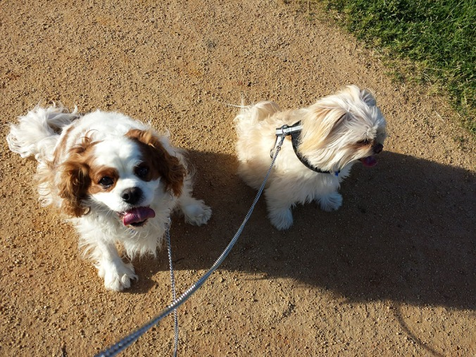 Buddy and Chloe