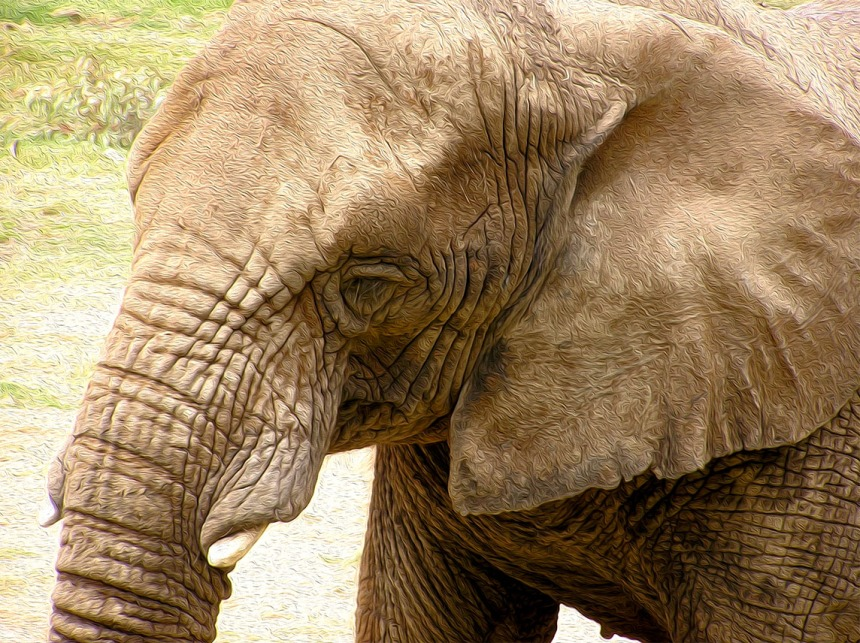 Week 2 - Elephant in Oil