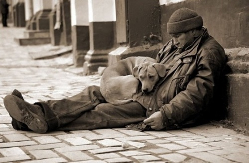 an overview of the life of homeless people and homeless dogs He said in the past six months there have been numerous instances of the city working with homeless people to get them off the streets and, in some cases, to get them connected to family in other.