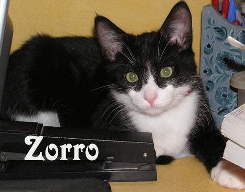 Zorro Kitten