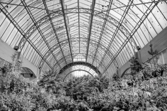 Large Green house