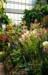 Auckland Museum Gardens