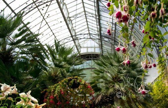 Auckland Museum & Gardens