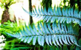 pair of ferns