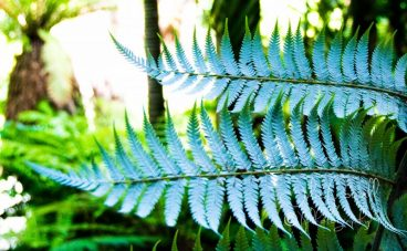pair of ferns