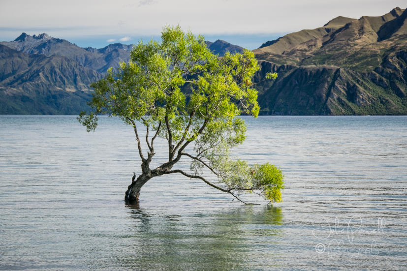 The Tree - Lake Wanaka