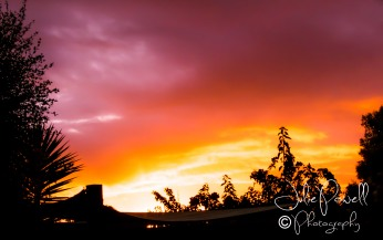 Orange of a fiery sunset