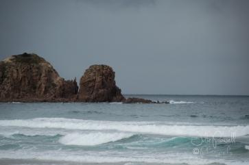 Cape Woolamai-0384