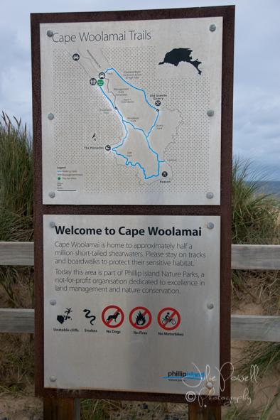 Cape Woolamai-0392