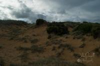 Cape Woolamai-0406