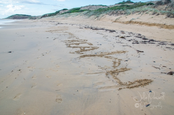 Flynn's Beach-0669