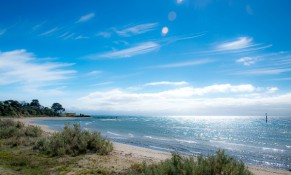 Indented Head-0533
