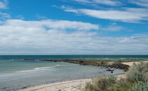 Indented Head-0537