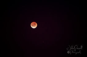Lunar Eclipse-15
