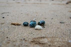 Woolamai Surf Beach-0349