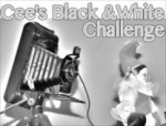 050714-black-and-white-41