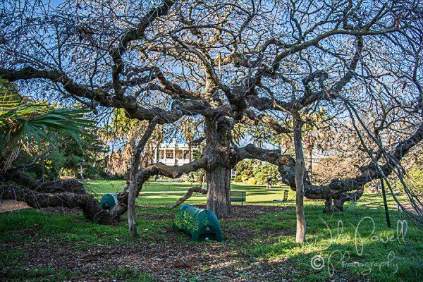 Kaesburgh Gardens-5-2