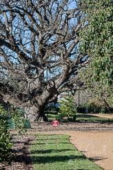 Kaesburgh Gardens-5-6