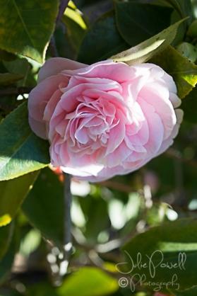 Kaesburgh Gardens-5-8