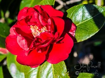 Kaesburgh Gardens-6-3