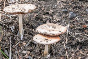 Mushrooms-4-2