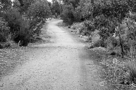 Paths_BW-5