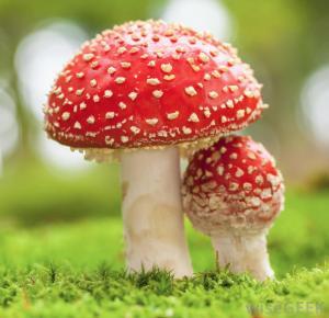 toxic-mushroom