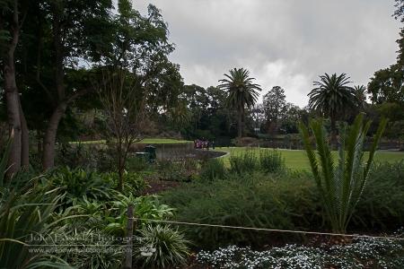Botanic Gardens-1778