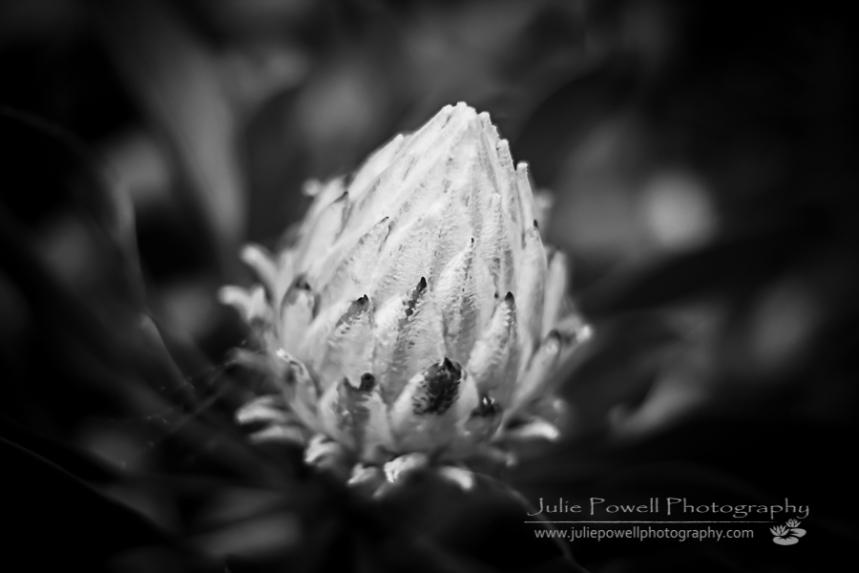Flower-1822