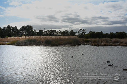Frog Hollow Wetlands