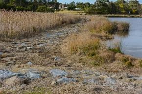 Frog Hollow Wetlands