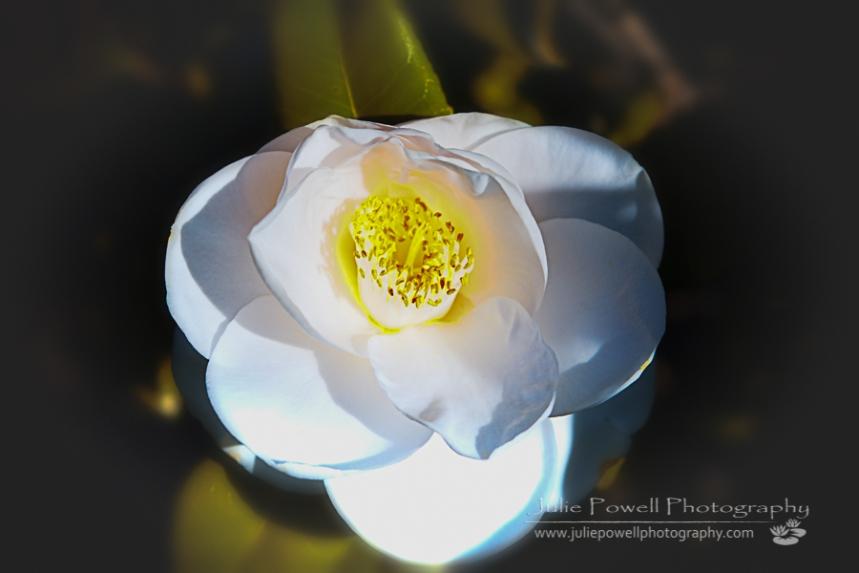 White Rose 4-2