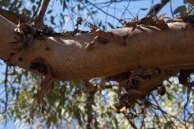 Dead Tree_B&W-4247