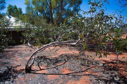 Dead Tree_B&W-4349