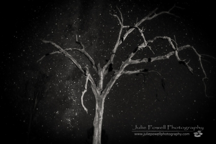 Dead Tree_B&W-