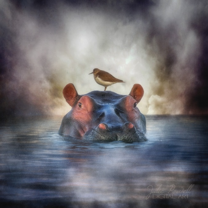 Hippo Dreaming