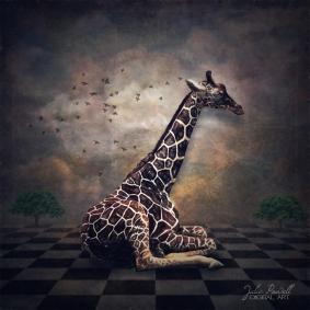 giraffe-time