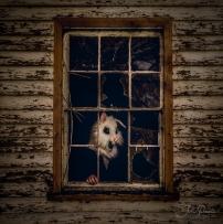 juliepowell_rabbit_small-3