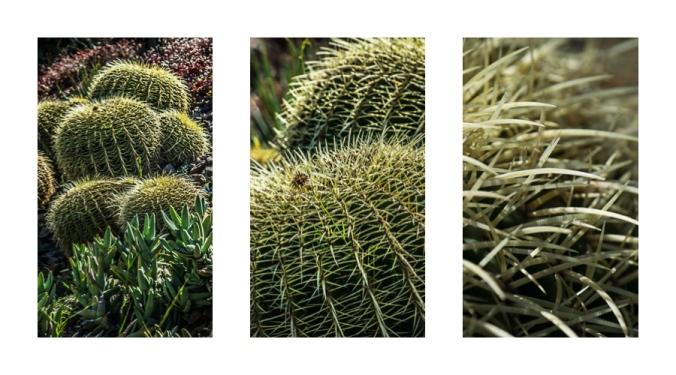 cacti-triptych