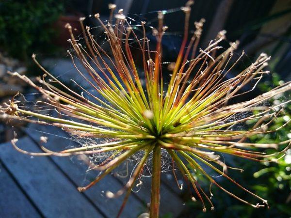 8 - Sunlight on jewelled plant
