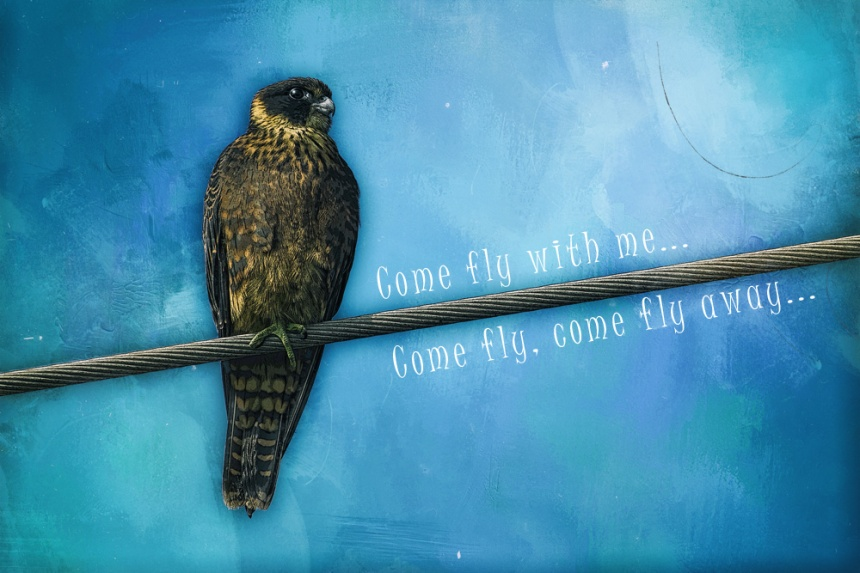 come-fly-with-me