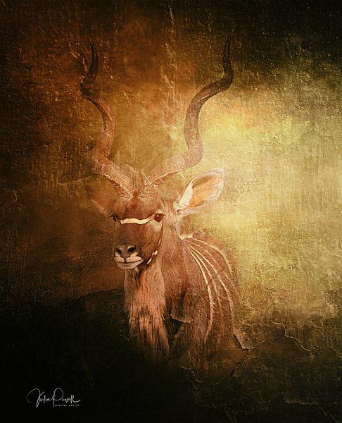Julie Powell_Kudu