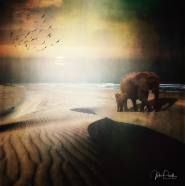 JuliePowell_Elephants on dunes at Sunset
