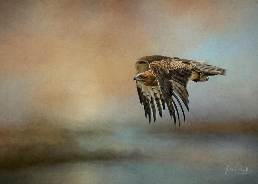 Julie Powell_in Flight-1