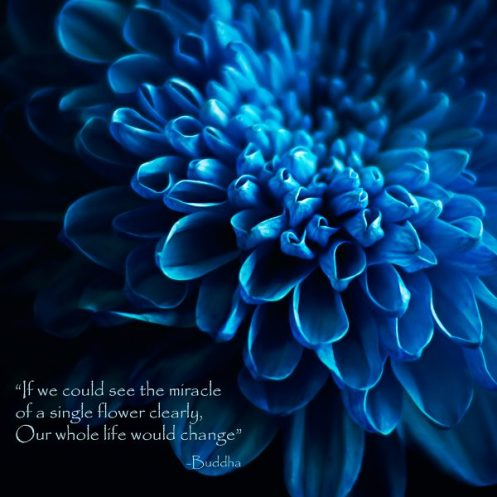 Julie Powell_Blue Dahlia-1