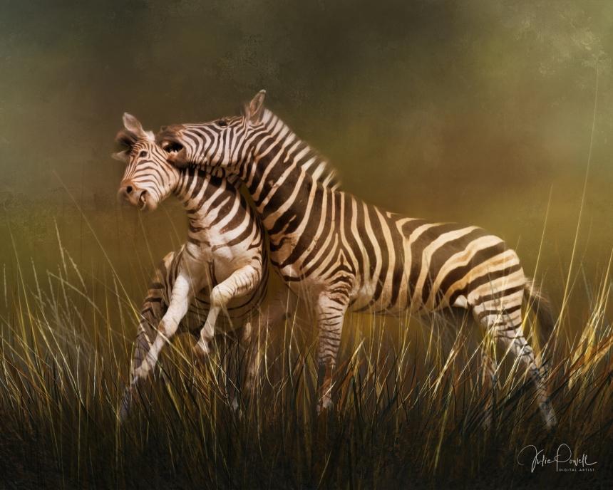 Julie Powell_Zebras - Adrian d'Blanco