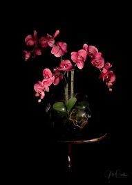 JuliePowell_Floral Fantasy-14