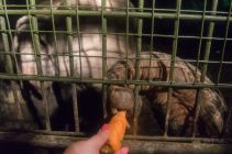Elephant taking a carrot from me