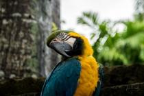 JuliePowell_Bali Zoo-10