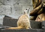 JuliePowell_Bali Zoo-12